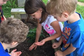 students planting carrots