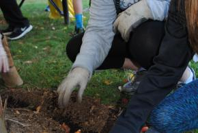 students planting tulips
